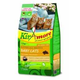 KirAmore special care kitten