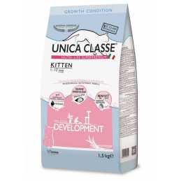 UNICA CLASSE CHAT KITTEN...
