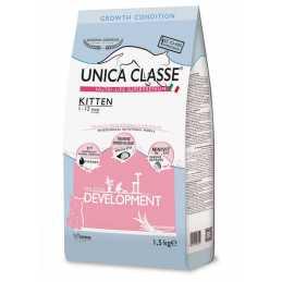 UNICA CLASSE CHAT KITTEN...